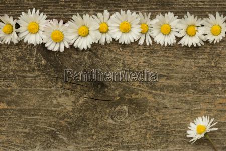 jardim flor planta madeira lindas flores