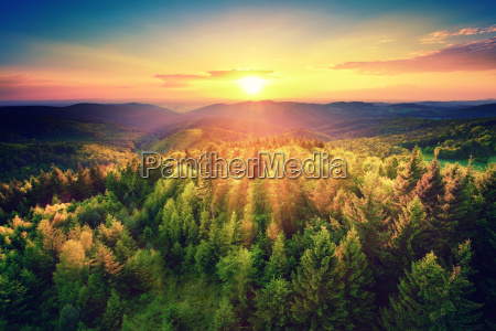 picturesque sunset above the forest