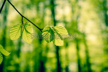 belo agradavel folha existir vida ambiente