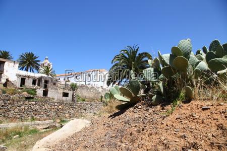 prickle thorns cacti cactus sting plant