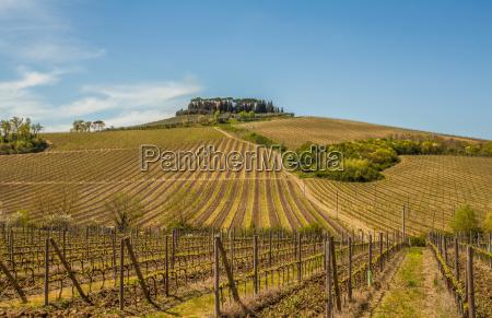 vinhas toscana paisagem natureza