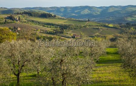 arvore agricultura vinho vinhas agua mediterranico