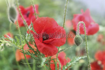 ambiente closeup flor planta verde lindas