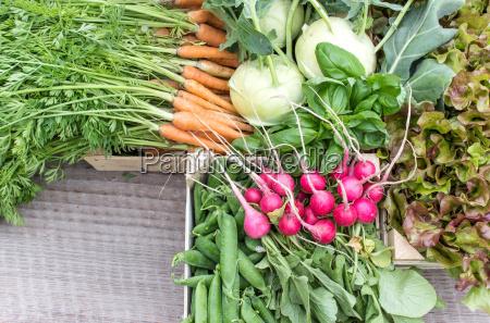 alimento tabela folha verde madeira raiz