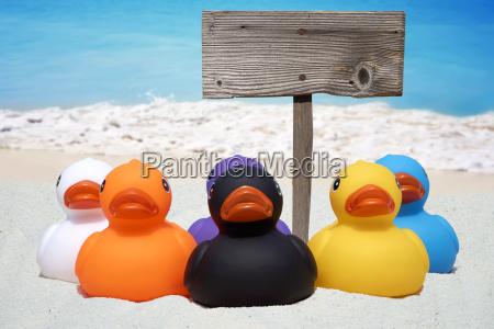seis patos de borracha coloridos e