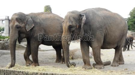 animais jardim zoologico duo berlim mamiferos