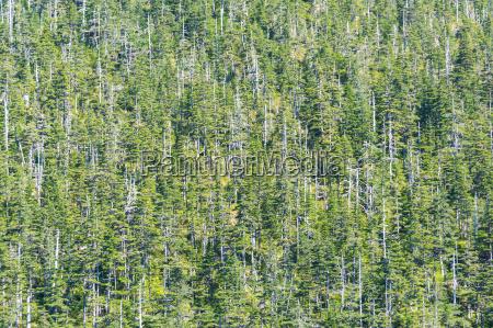 ambiente arvore arvores verde selvagem tronco
