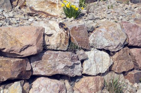 jardim pedra flor flores planta rocha