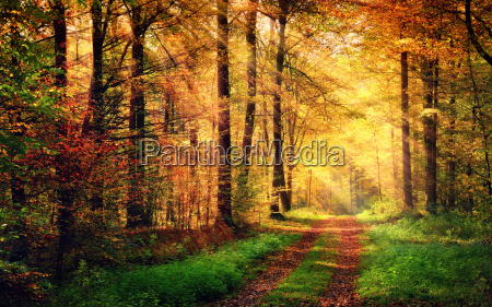 autumn forest scenery with rays of