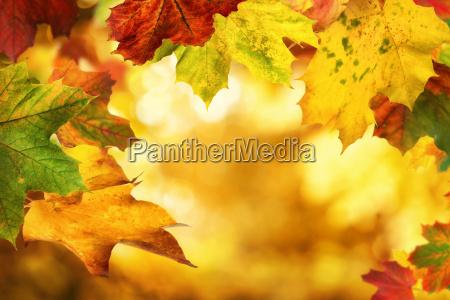 autumn leaves framing a nice bokeh
