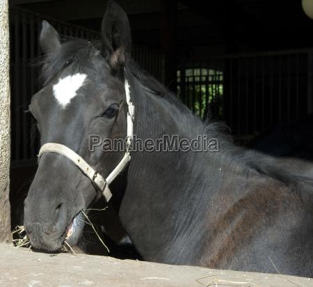 cavalo animal animal de estimacao mamifero