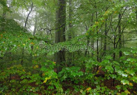 florestas deciduas na chuva e neblina