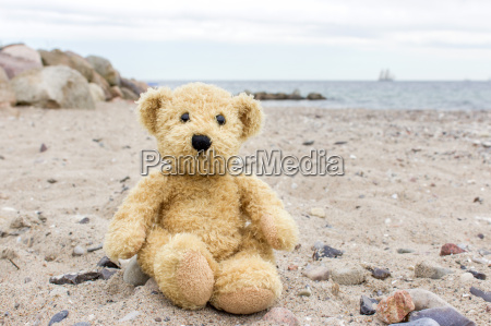 a teddy bear sits on the