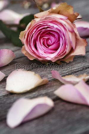 cartao com rosas