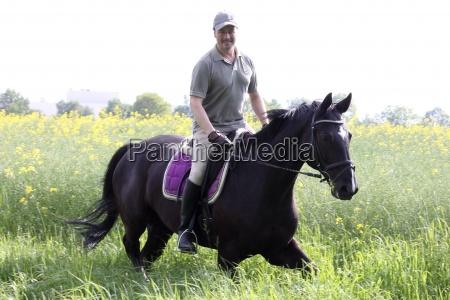 cavalo animal de estimacao hamburgo sela