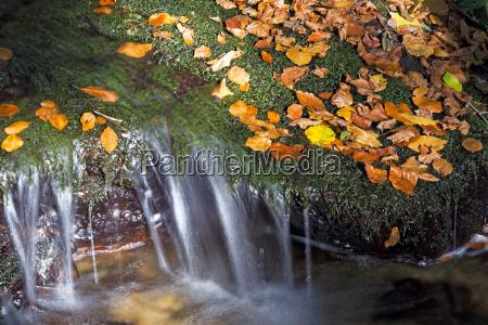 folhas ribeiro bavaria temporada alemanha paisagem
