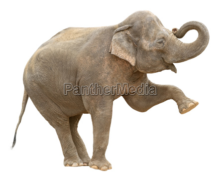perfil saudacoes liberado cor feminino animal