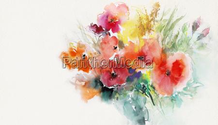 papel pintado das papoilas