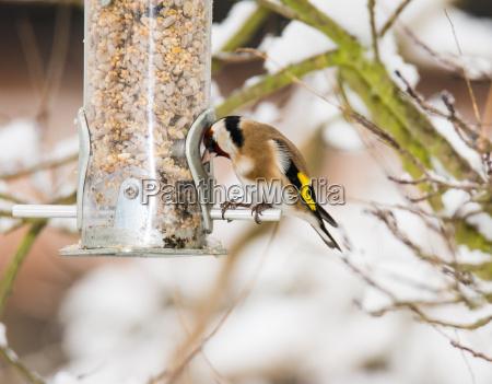 alimento closeup inverno animal passaro primavera