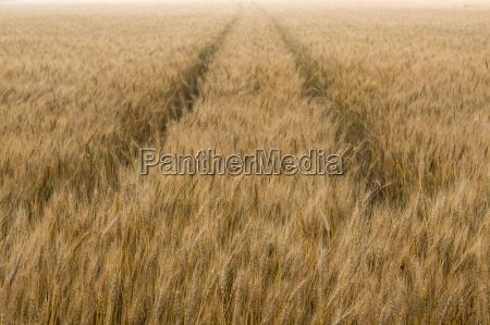 campo da cevada