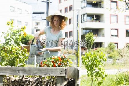 jardinagem da mulher nova jardinagem urbana