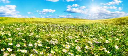 o sol aquece o prado largo