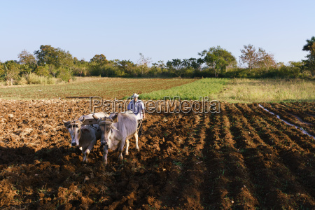 man farmer at work ploughing the