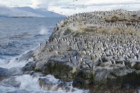 animais elegancia argentina antartica