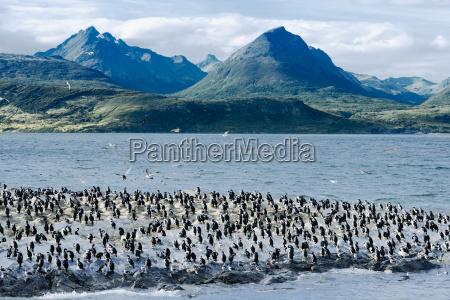 animais argentina antartica