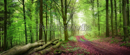 forest path in the green forest