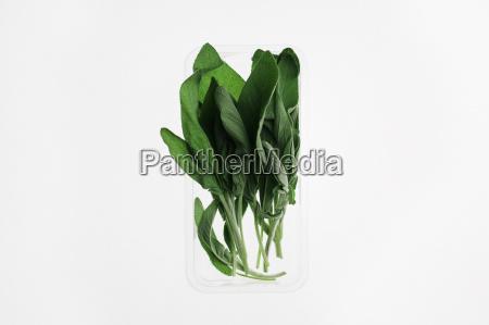natureza morta alimento folha botanica frescura