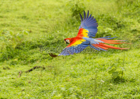 animal passaro liberdade horizontalmente ao ar