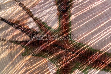 madeira tronco abstrato nucleo formacao pano