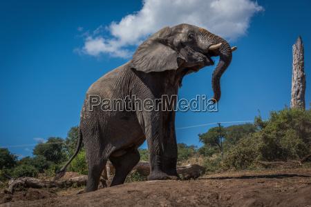 elefante que escala o banco de