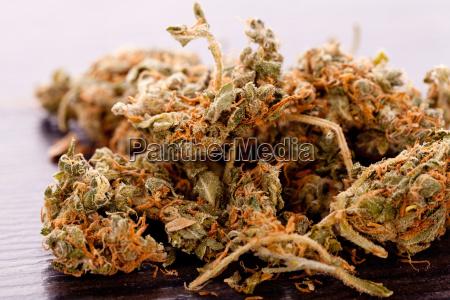 fumaca lazer relaxamento closeup flor planta