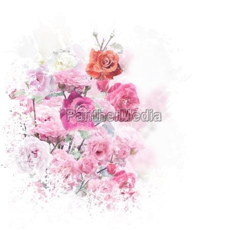 a rosa floresce a aguarela