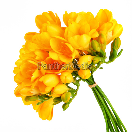 ramalhete de flores amarelas bonitas