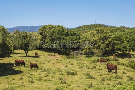 arvore animal mamifero agricultura espanha ver