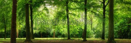 panorama da floresta na luz macia