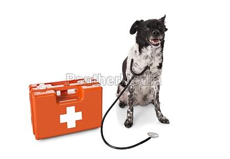 medico saude cao emergencia caixa peito