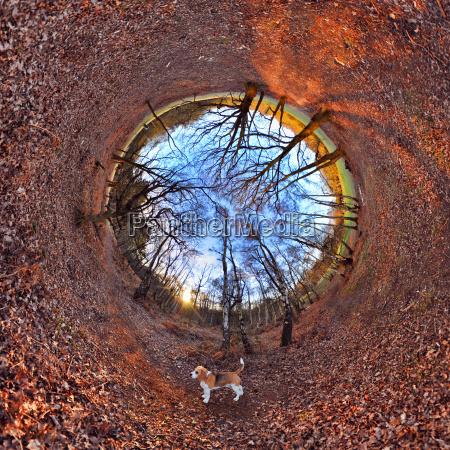 folha arvore parque luz solar tunel