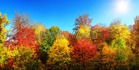 colorful autumn trees in the sun