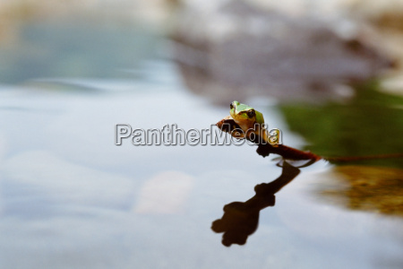 frog keeping away from the water