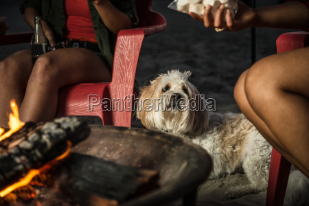 women and dog by campfire san