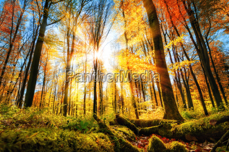 autumn scenery in the forest with