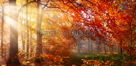 autumn in the forest with rays