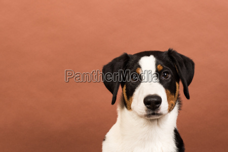 dog face on a red background
