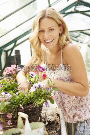 plantas crescentes da mulher na estufa