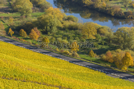 river landscape with colorful vineyards in