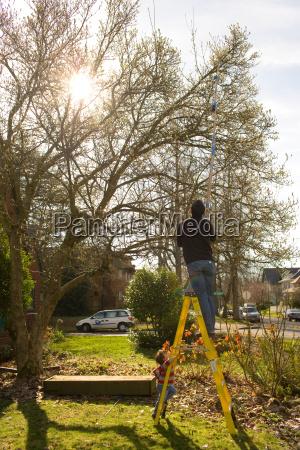 man pruning trees in garden on